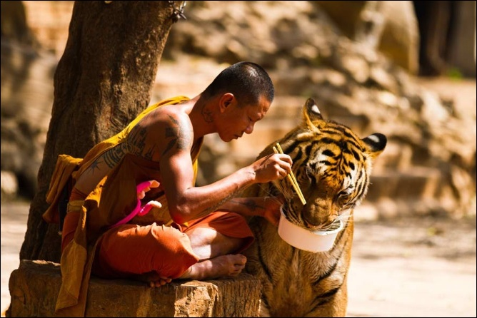 Quelles sont vos meilleures vidéos montrant l'intelligence et la sensibilité animal 6a011570821e68970b016300739350970d-700wi